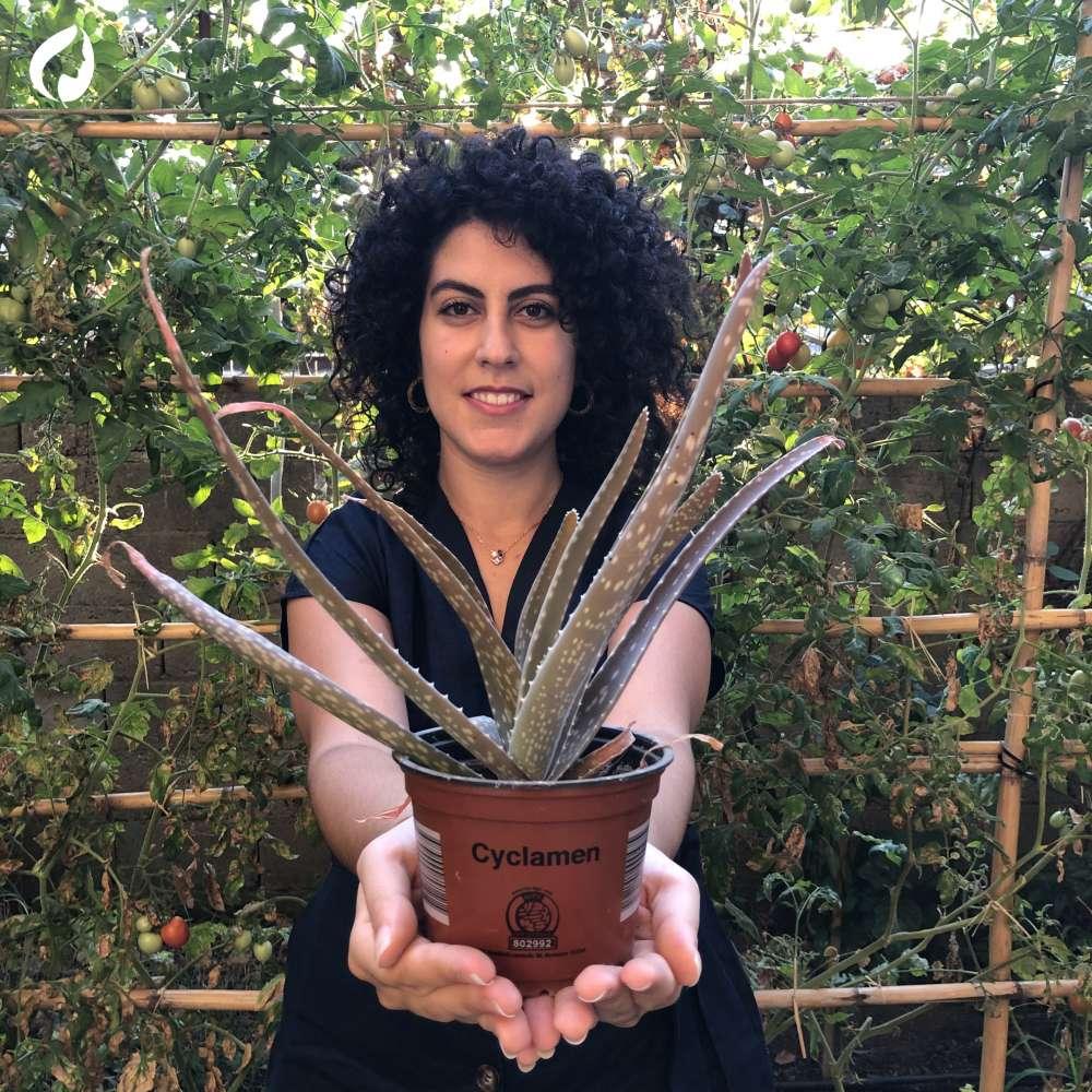 Aloe: caratteristiche e proprietà