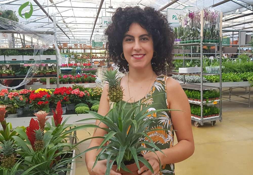 Ananas sativus: esfoliante naturale